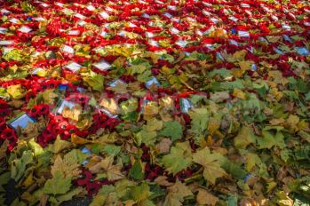 poppies-and-autumn-leaves_3249105